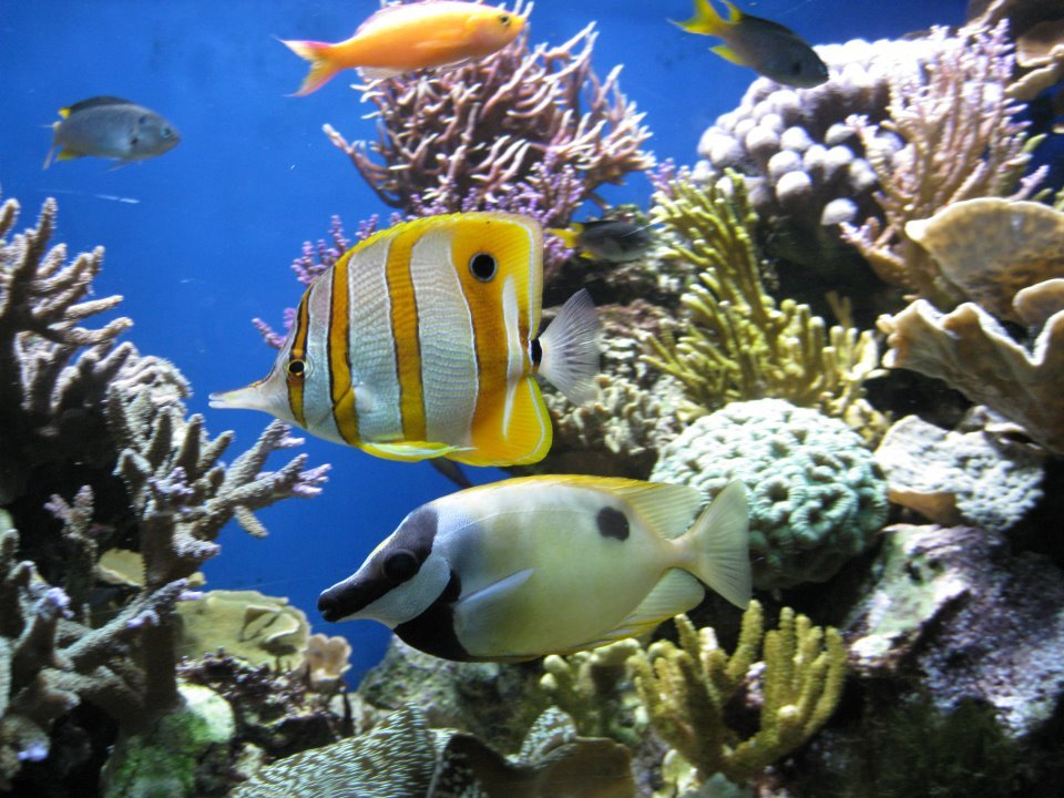 things to do on a rainy day in cornwall - blue reef aquarium