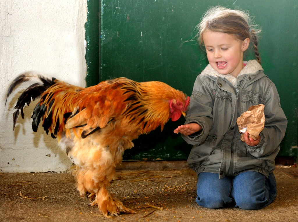 things to do on a rainy day in cornwall - dairyland farm world